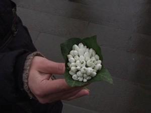 В Крыму продолжается операция «Первоцвет-2011»
